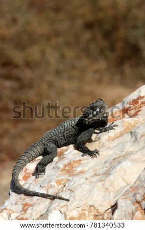 lizard sits on a rock and basks under the sun  #781340533