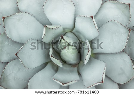 flat lay of blue succulent plant with thorn in garden Royalty-Free Stock Photo #781611400