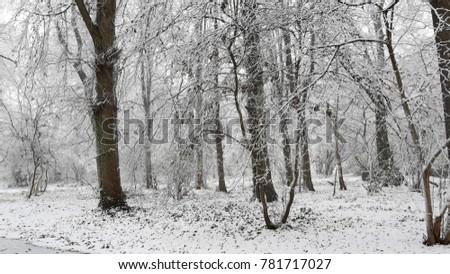 Snowy winter landscape in city park #781717027