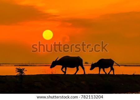 Quang Ninh, Quang Binh Province, Vietnam, October 26, 2017: Sunset on Kien Giang River Royalty-Free Stock Photo #782113204