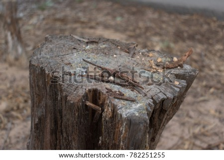 Trunk cut of brown tree in the pine forest, Spain #782251255