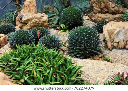 mix cactus plants. #782274079