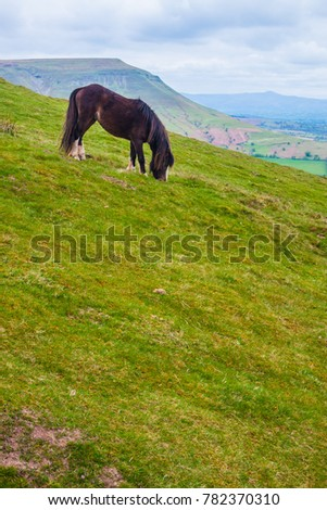Horse in Brecon Beacon's National Park, Wales. #782370310