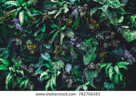 Beautiful nature background of vertical garden with tropical green leaf #782706583