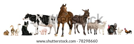 Variety of farm animals in front of white background Royalty-Free Stock Photo #78298660