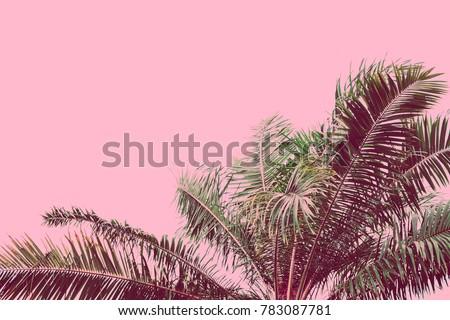 Palm tree retro toned. Vintage background. Travel card. Soft focus