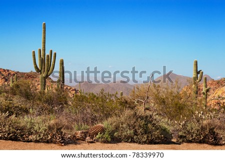 Path through the saguaro, ocotillo and mountains of the Tonto National Forest, Arizona #78339970