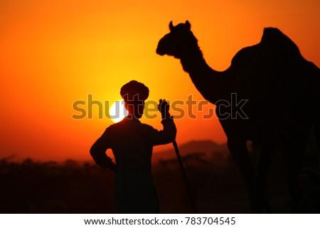 Pushkar, Rajasthan, India - November 25, 2012 : Silhouette of a camel and a man against sunlight at Pushkar Camel Fair #783704545
