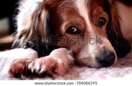 my cute dog #784086595