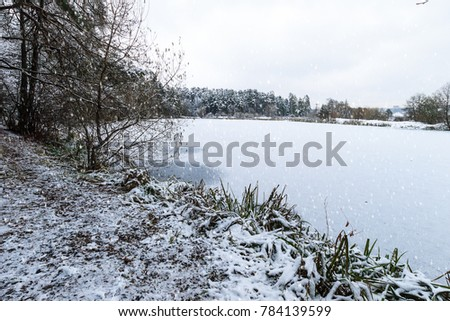 Pond covered with frost at pine forest at winter season with falling snow. First snow at autumn. Snowfall. #784139599