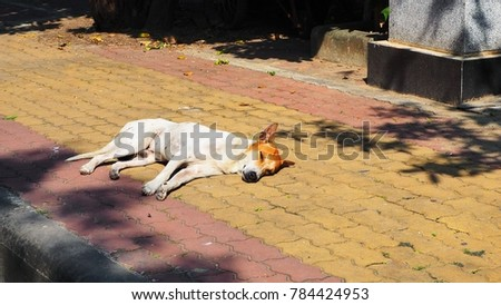 White brown Thai dog sleep on the footpath #784424953