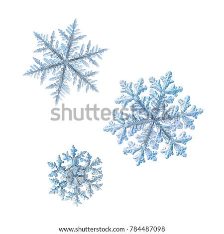 Three snowflakes isolated on white background. Macro photo of real snow crystals: large stellar dendrites with complex ornate shapes, fine hexagonal symmetry, elegant arms and glossy relief surface. #784487098