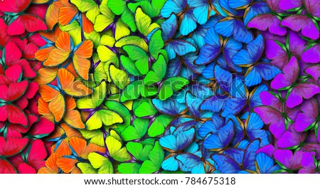 Colors of rainbow. Pattern of multicolored butterflies morpho, texture background. Royalty-Free Stock Photo #784675318