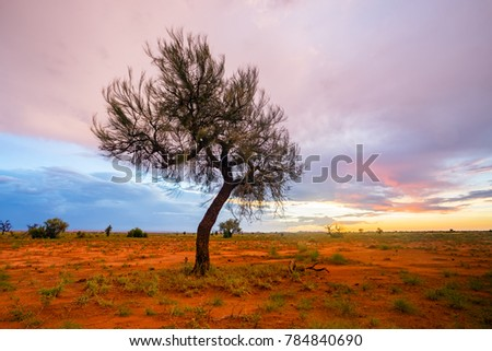 A lone Hakea tree during twilight hour in the Pilbara region of North Western Australia, near the mining towns of Marble Bar and Port Hedland. #784840690