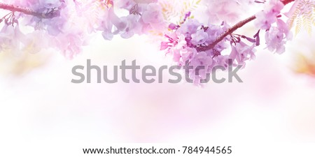 Abstract floral backdrop of purple flowers over pastel colors with soft style for spring or summer time. Banner background with copy space. #784944565