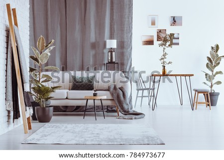 Ladder and plants in spacious apartment with sofa and dining table against white wall with photos #784973677