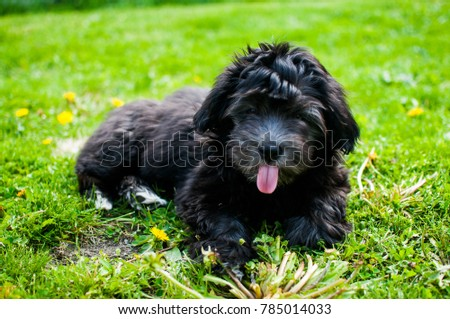 Cute and adorable puppy #785014033