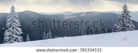 Winter mountain landscape with snow covered pine trees #785334535
