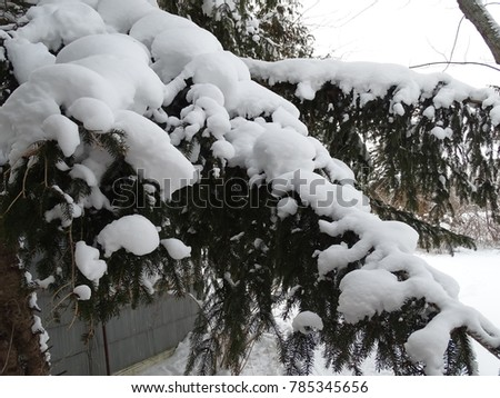 pine tree branch covered in snow #785345656