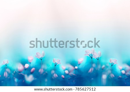 Spring forest white flowers primroses on a beautiful gentle light blue background. Macro. Floral  desktop wallpaper a postcard. Romantic soft gentle artistic image, free space for text.