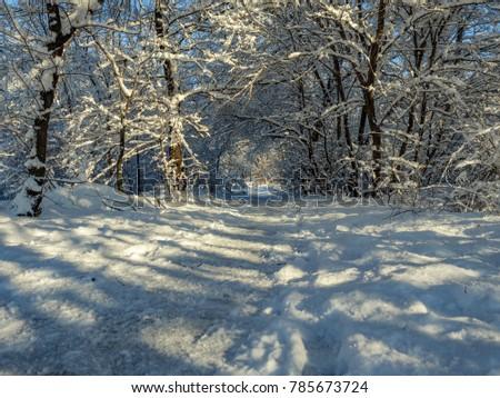 Seasons Winter Park City Trees Snow Path #785673724