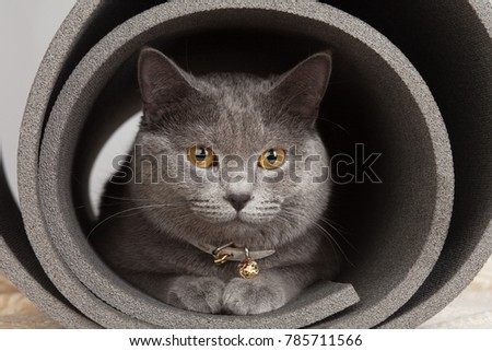 Grey cat sitting in a twisted yoga mat. #785711566