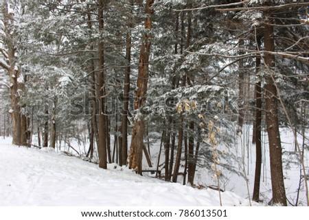 Winter wonderland scence #786013501