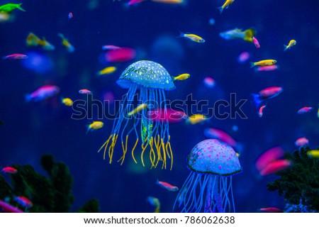 aquarium of jellyfish, fish, seaweed Royalty-Free Stock Photo #786062638