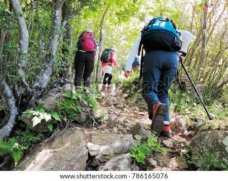 Climbing trail of fresh green #786165076