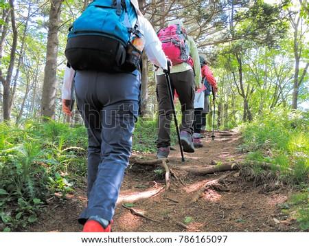 Climbing trail of fresh green #786165097