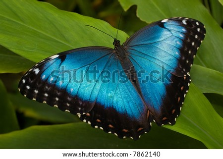 A nice and detailed picture of a tropical butterfly