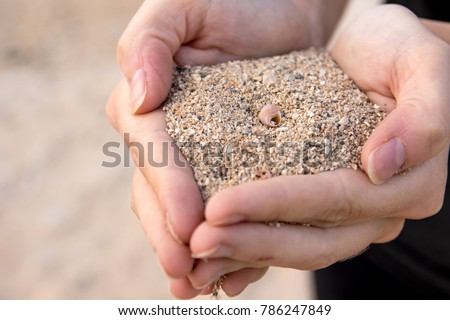 Two hands holding full sands with a small snail shell in center #786247849