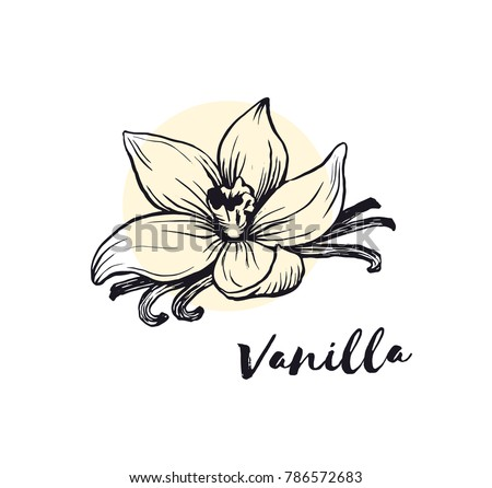 Vanilla flower sketch ink vector illustration Royalty-Free Stock Photo #786572683