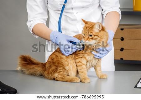 Veterinarian examining a kitten in animal hospital #786695995