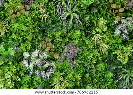 wall is full of Vegetation green color. #786962215