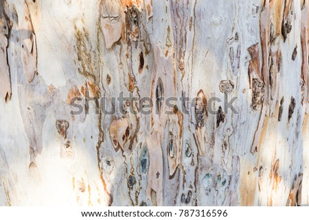 Bark of tree. Background. Wallpaper texture.Close up. #787316596