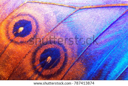 Wing of a butterfly Morpho texture background. Morpho butterfly. Extreme macro. Royalty-Free Stock Photo #787413874