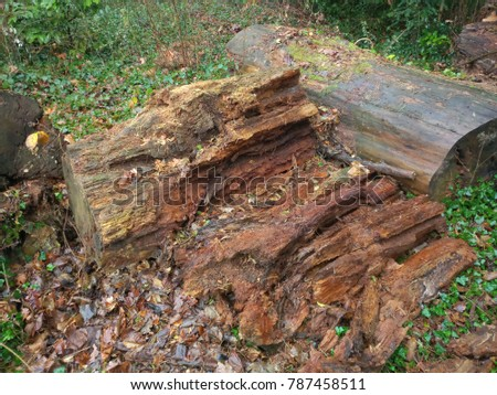 Large chopped brown bark of a tree  #787458511