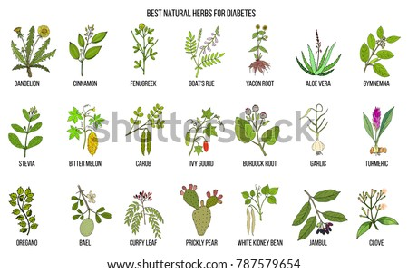 Herbs and spices that fight against diabetes. Hand drawn vector set of medicinal plants #787579654