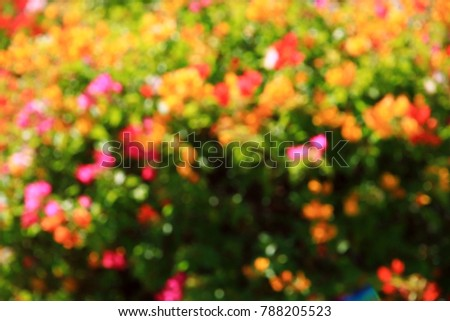 background nature Colorful flowers  #788205523