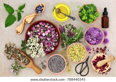 Herbal medicine preparation with fresh herbs and flowers, aromatherapy essential oil, mortar with pestle and scissors on hemp paper background. Top view. #788440345