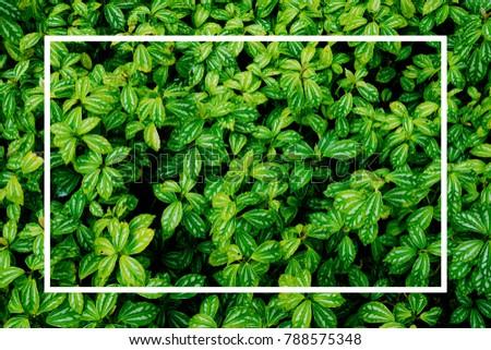green leaf background. Leaves  #788575348