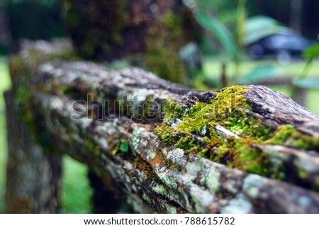 Moss lichen on Old timber #788615782