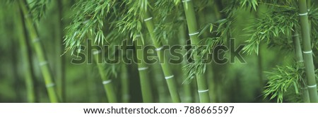 Bamboo forest background Royalty-Free Stock Photo #788665597
