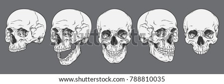 Anatomically correct human skulls set isolated. Hand drawn line art vector illustration.