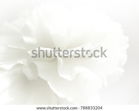 White flowers background. Macro of white petals texture. Soft dreamy image #788833204