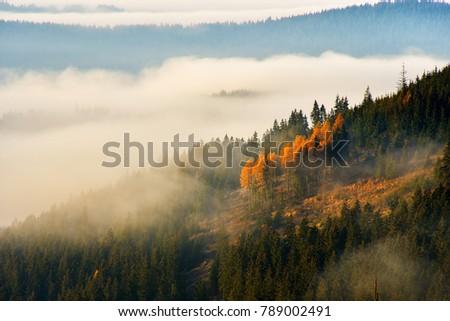 Stunning nature with misty landscape,Holbav village,Carpathians,Transylvania,Romania,Europe #789002491