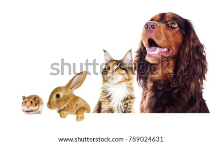 portrait of a dog and a cat looking sideways #789024631