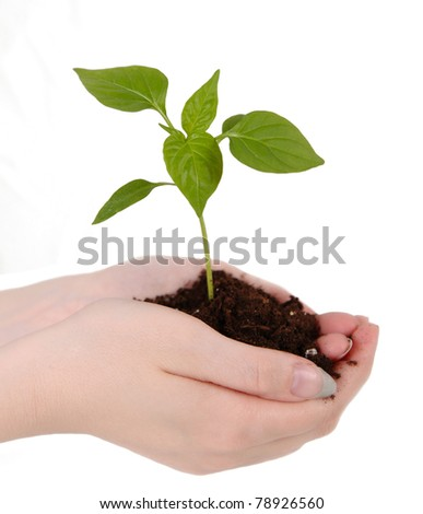 small green seedling with soil resting in woman's hands. isolated on white