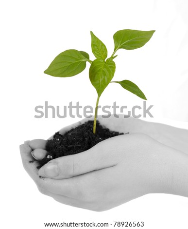 tender green seedling with soil resting in woman's hands. isolated on white
